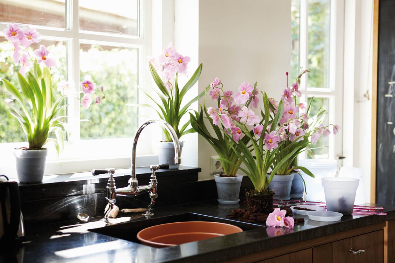 на кухне цветы фото