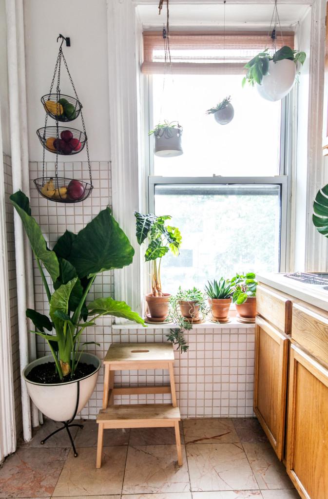 Комнатные цветы для кухни
